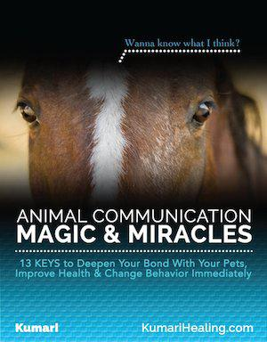 Animal Communication Magic and Miracles